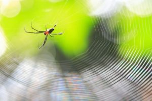 répulsif araignée