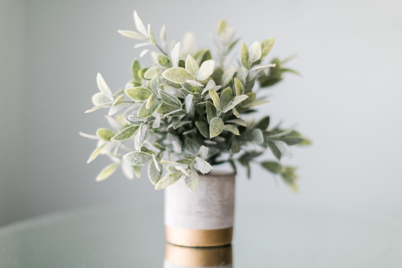 Cinq plantes purificatrices d'air pour l'intérieur !